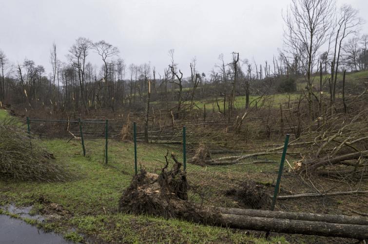 Bosquet ravagé (5) par la tornade de Roetgen, le 13 mars 2019. Source : Eifelmomente.de