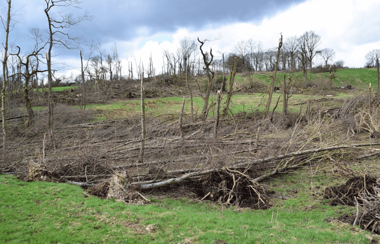 Parcelles forestières ravagées par la tornade de Roetgen du 13 mars 2019. Crédit photo : Björn Stumpf. Source : WTINFO Tornado Research Project