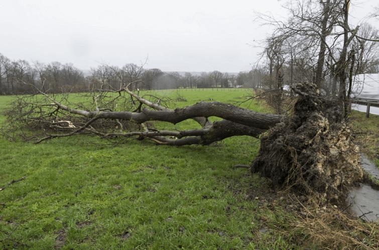 Arbre déraciné par la tornade de Roetgen à hauteur de la route B 258 (3), le 13 mars 2019. Source : Eifelmomente.de