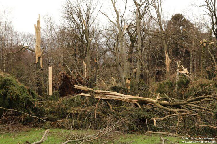 Dégâts portés aux arbres par la tornade de Roetgen du 13 mars 2019. Source : Wetterservice Koblenz