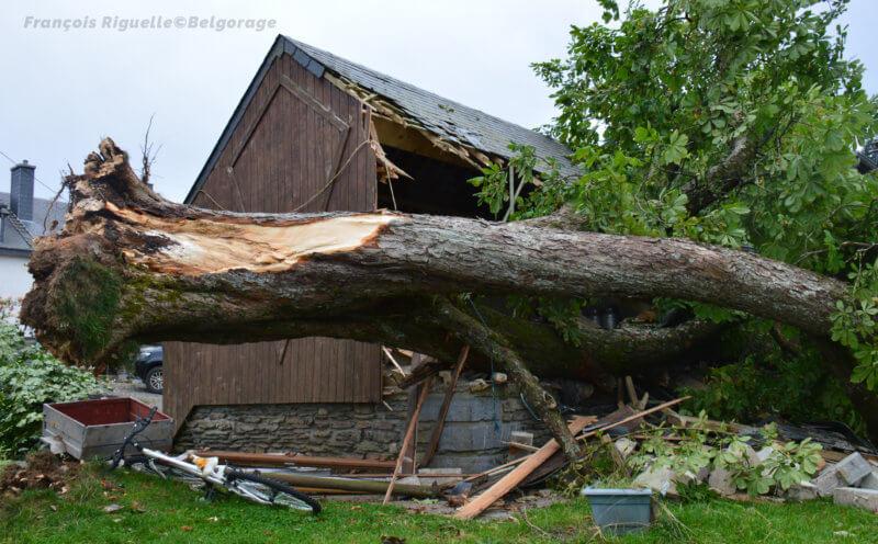 Arbre ayant été brisé à la base pour s'effondrer sur un bâtiment de la ferme Les Mouches (Province de Luxembourg) en le détruisant partiellement, le 8 août 2017. Crédit photo : François Riguelle