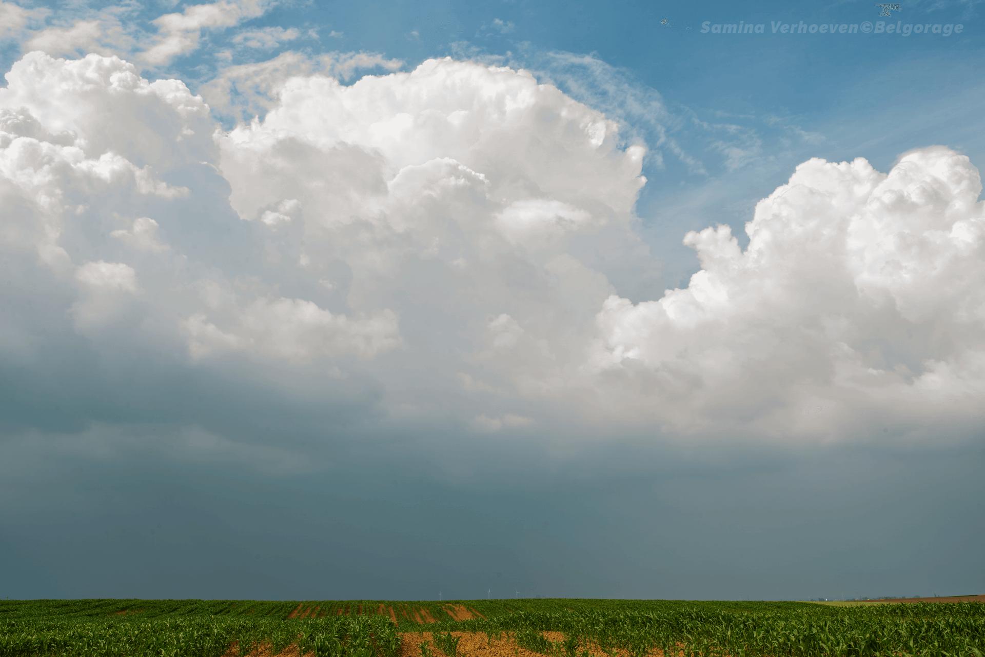 Cellule se développant sur le sud-est du Limbourg, observée depuis Bassenge en province de Liège, le 17 juin 2020 vers 16h20. Crédit Photo : Samina Verhoeven
