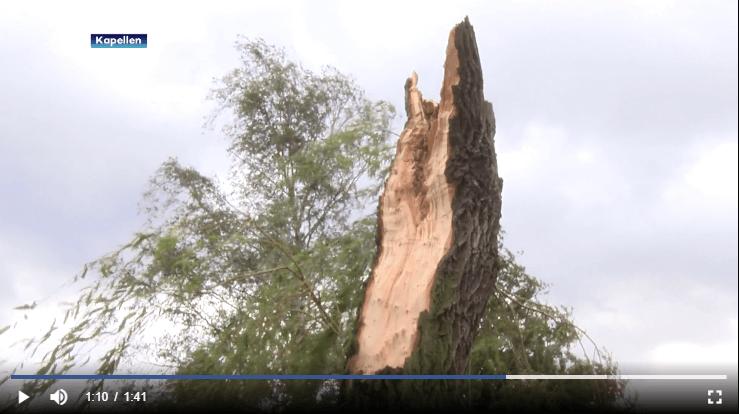 Saule sectionné par la tornade de Kapellen, le 5 octobre 2020. Capture d'écran d'un reportage d'ATV