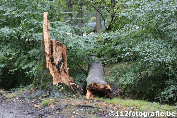 Arbre sectionné à Braaschaat par la tornade le 5 octobre 2020. Source et crédit photo : 112photographie.be
