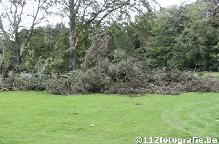 Dégâts observés sur les arbres du parc de Braaschaat suite au passage de la tornade. Source et crédit photo : 112fotographie.be